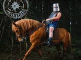 Steve'n'Seagulls – Brothers in farms